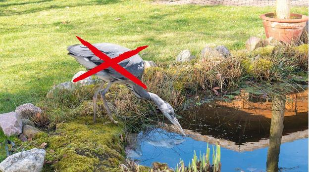 Reiher wartet am Teich